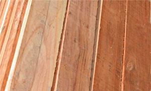 Venta de maderas nacionales - Saligna